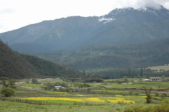 西藏林芝图片:鲁朗风情6