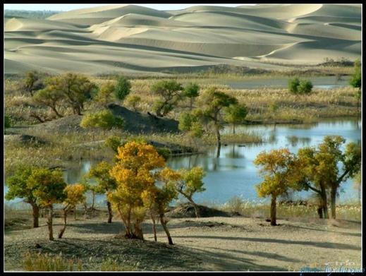 塔里木河的传说