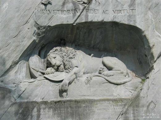 世界上最悲伤的狮子