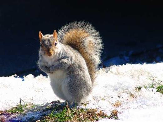 很多可爱的小松鼠蹦蹦跳跳的穿梭于树林里
