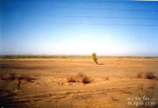 内蒙古高原一棵树