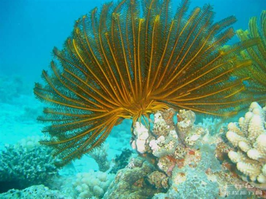 西沙群岛海底画