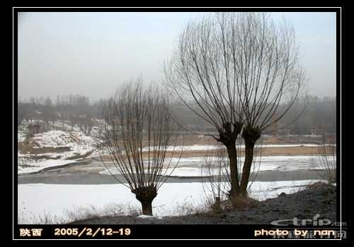 [风光]冬天的树_乐乐简笔画