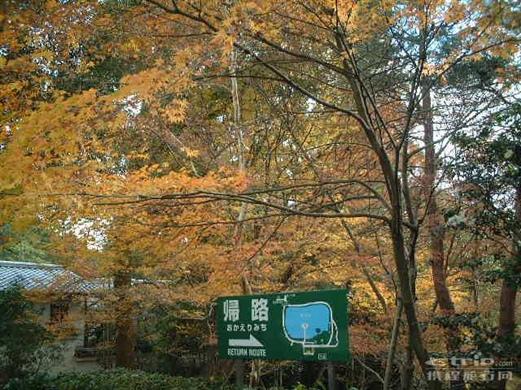 秋天的大树_照片分享
