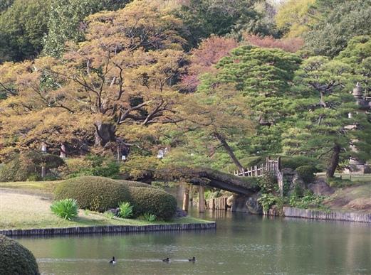 春天的东京_照片分享