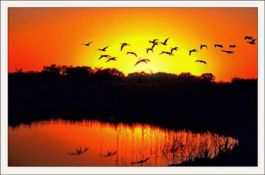 """湿地是""""地球之肾"""""""