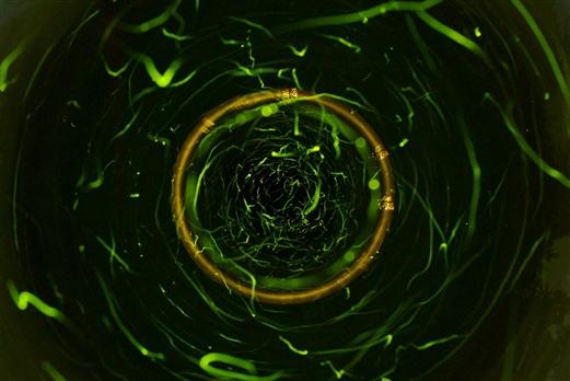 0 人气:7962                    照片简介:  萤火虫的生命之光
