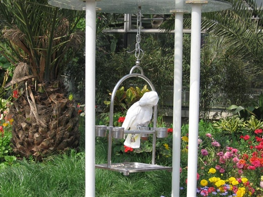 ... 图片图片 小鸟依人的图片,小鸟依人 图片 29 542x814