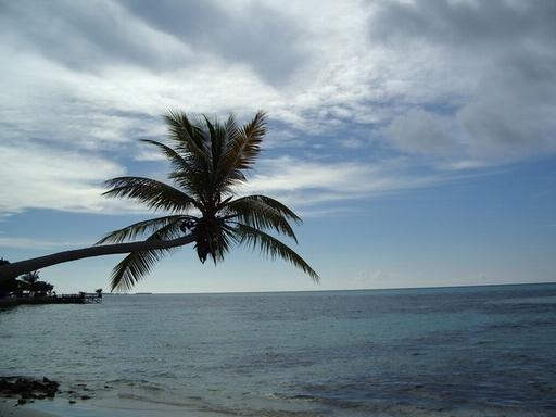 椰树简笔画 漂亮 风景