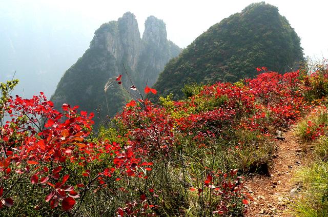 宜昌旅游攻略 三峡沿江风景区红叶观赏最佳时期  听暮雨无限美好的一