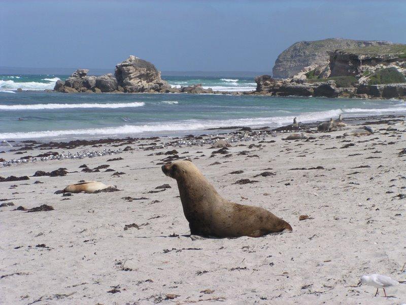 澳洲体验之旅—袋鼠岛亲密接触动物