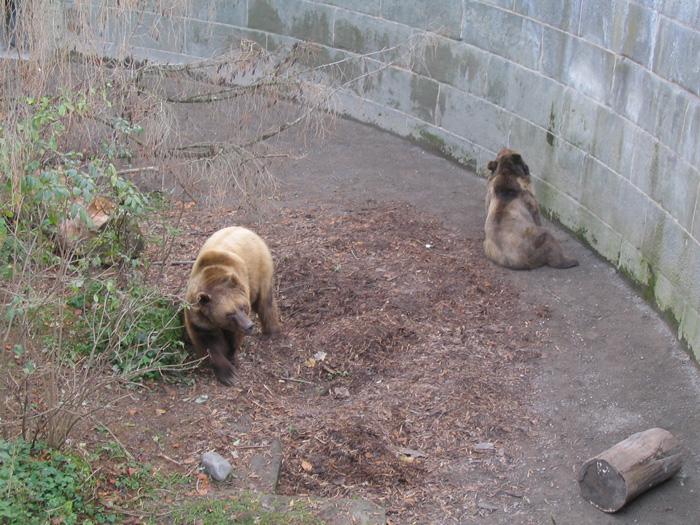 事实上,熊公园并不是一般想像的动物园,只是以围墙将几只熊围住,任熊
