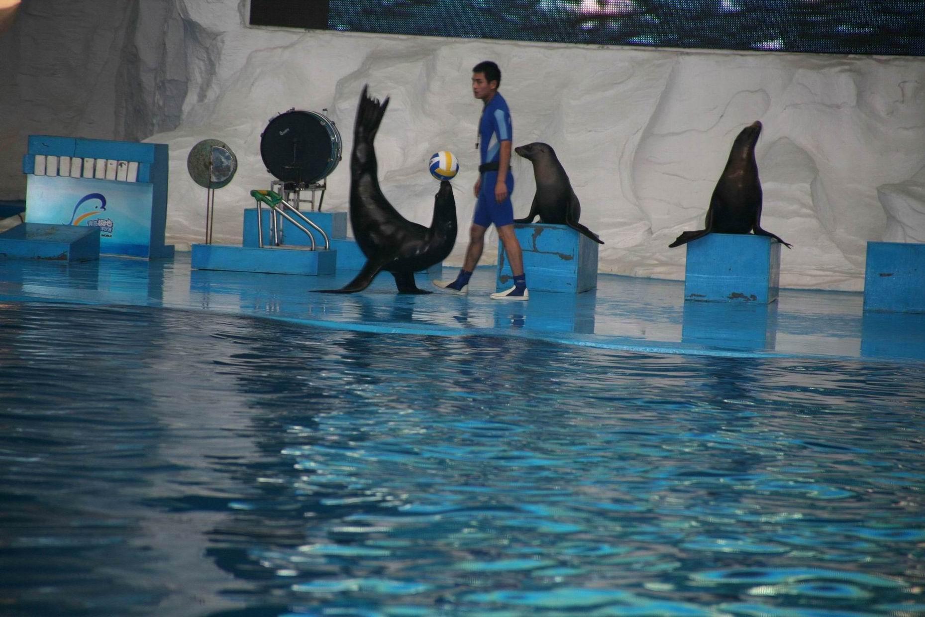 在青岛极地海洋世界和动物的亲密接触