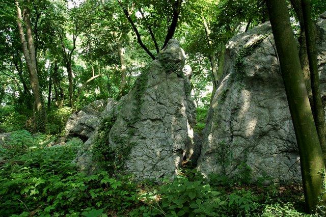 壁纸 风景 森林 桌面 640_426
