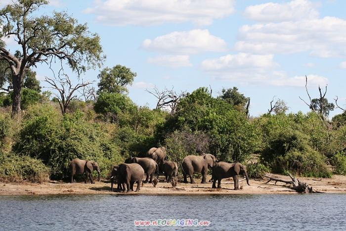 南部非洲行五:博茨瓦纳野生动物园