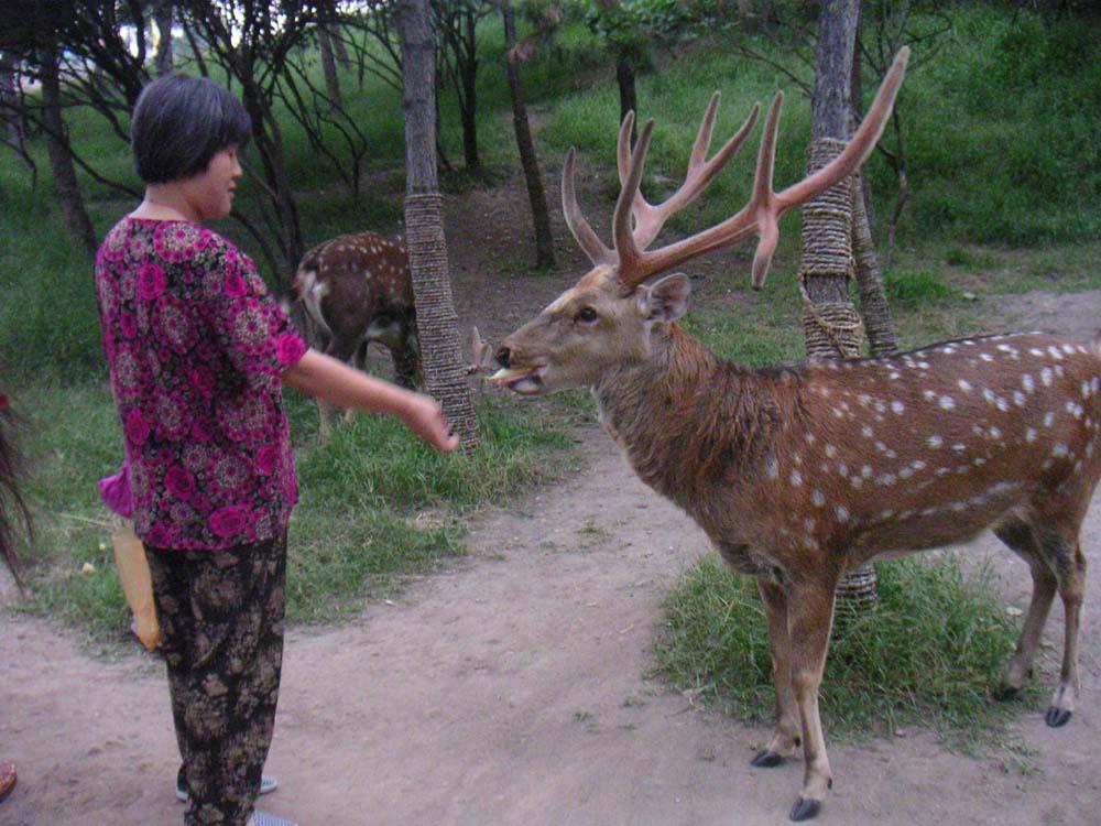 承德山区野生动物种类