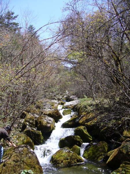 qq灵气森林背景图