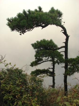 就在悬崖边山头上的松树下,云雾飘渺之中,吃了些干粮当午饭,算得上是