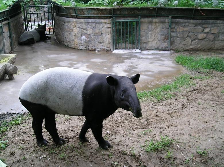 我爱北京动物园(老貘和黑熊)