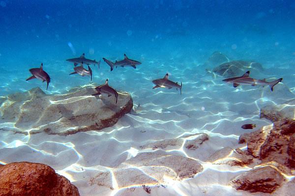 马来西亚热浪岛; 热浪岛位于丁加奴州海岸外; 热浪岛纯玩六日