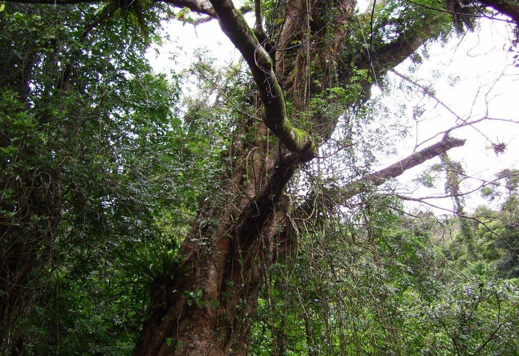 尖峰岭热带雨林