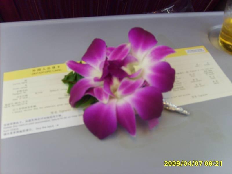 飞机降落浦东机场前,每位小姐女士都会得到一个泰航赠送的兰花胸针.