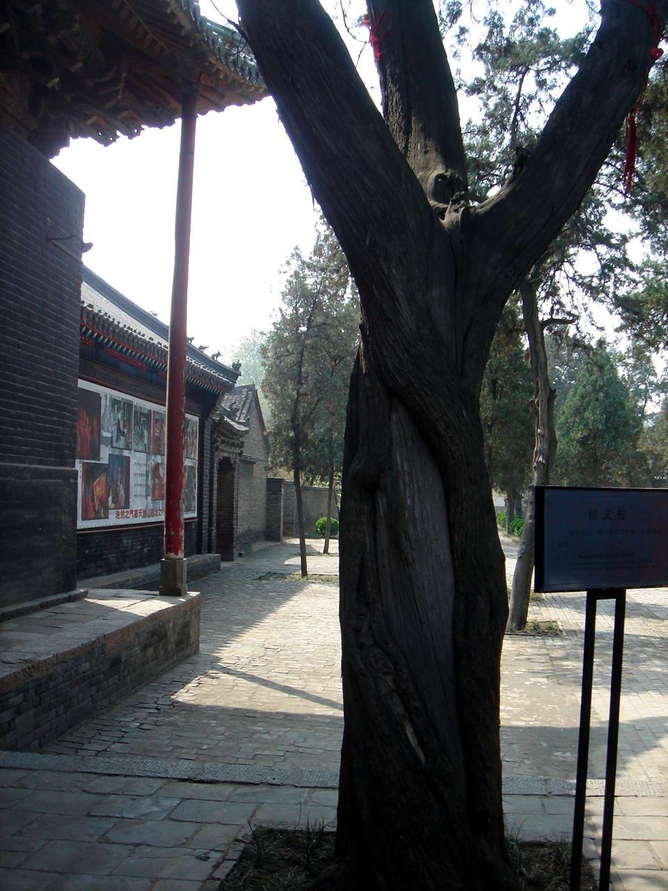 关林之林——洛阳古城感想 - 海风景 - 海风景