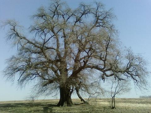 梨树神榆 的故事 - 正步穿越红尘 -  正步穿越红尘  笑看尘事纷争
