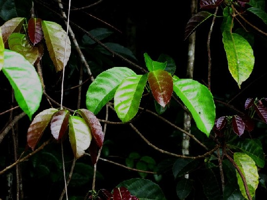 亚马逊原始森林四记
