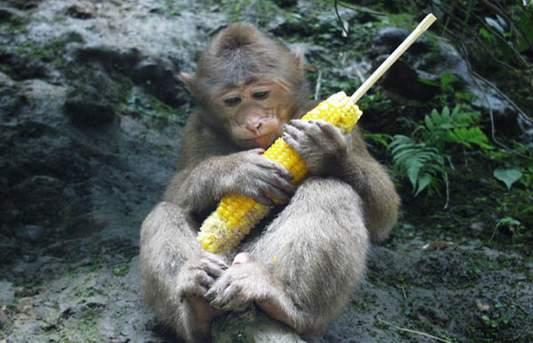 峨眉山的就是攻略拽西昌周边旅游攻略四川旅游邛海成都旅游住宿猴子图片