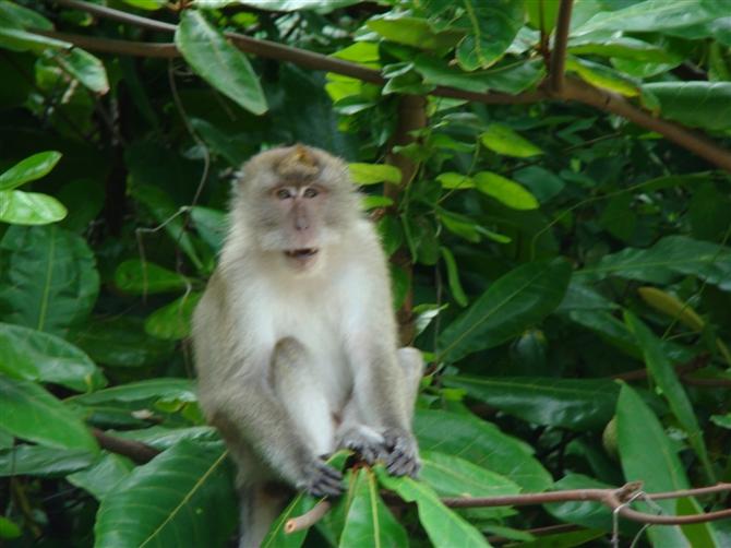 还有喜欢表演的猴子,简直就是个动物与人和谐共存的