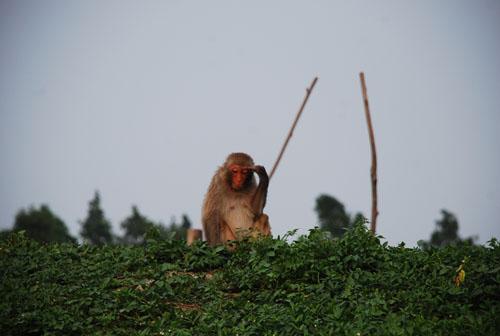 一睹为快,大千生态庄园的野生动物群体照part 2