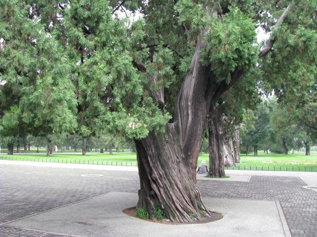 壁纸 树 榕树 640_480
