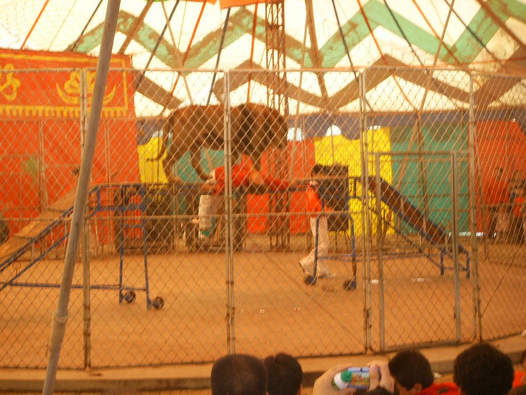 动物园的动物比北京动物园的动物少多了,我们费了老半天劲找到了熊猫