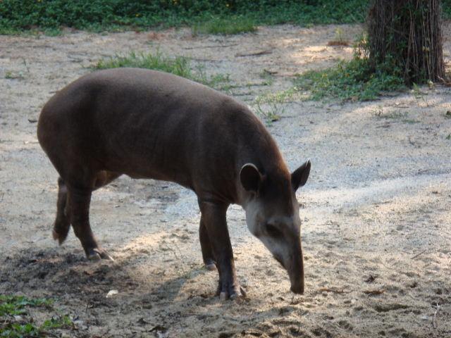 广州香江野生动物园