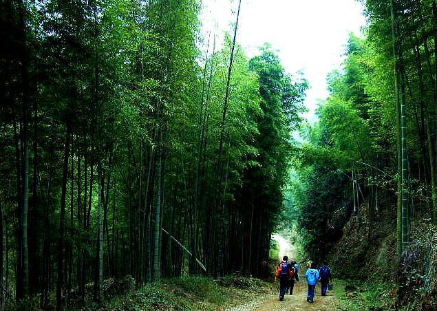 壁纸 风景 森林 桌面 635_452