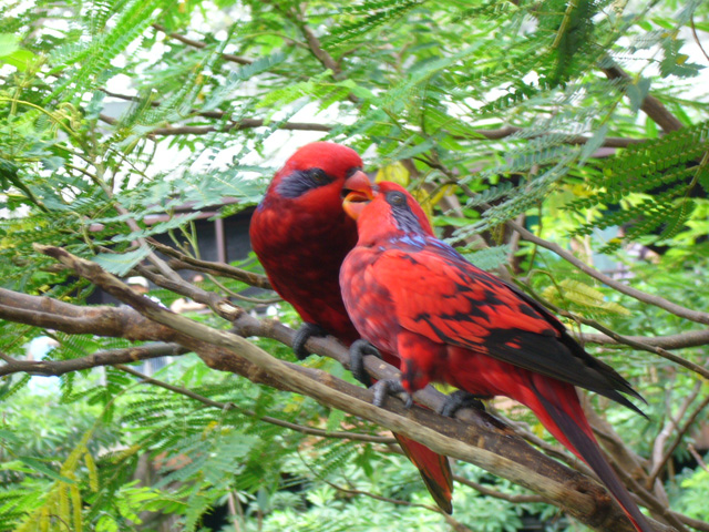 新加坡飞禽公园