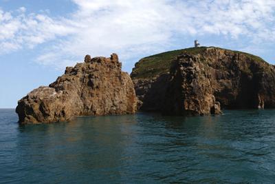 山东威海海驴岛再现 海鸟
