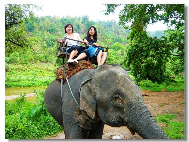 大象真是一种可爱的动物