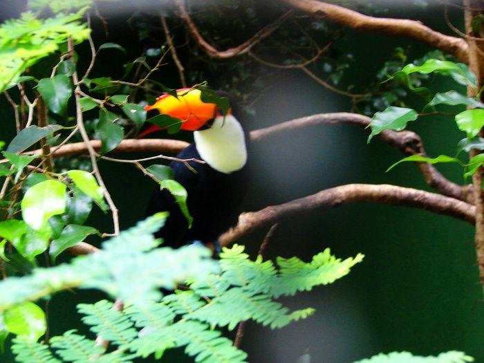 咖啡 大嘴鸟/(大嘴鸟2)