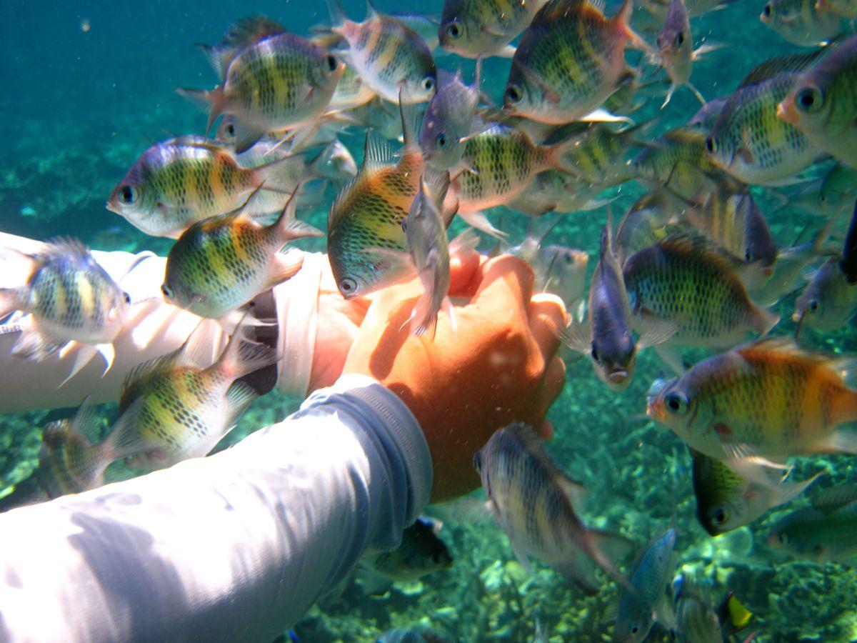 环保手工小制作大全海洋世界