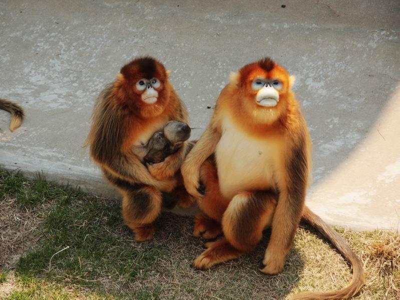 猴子戏耍图片大全可爱