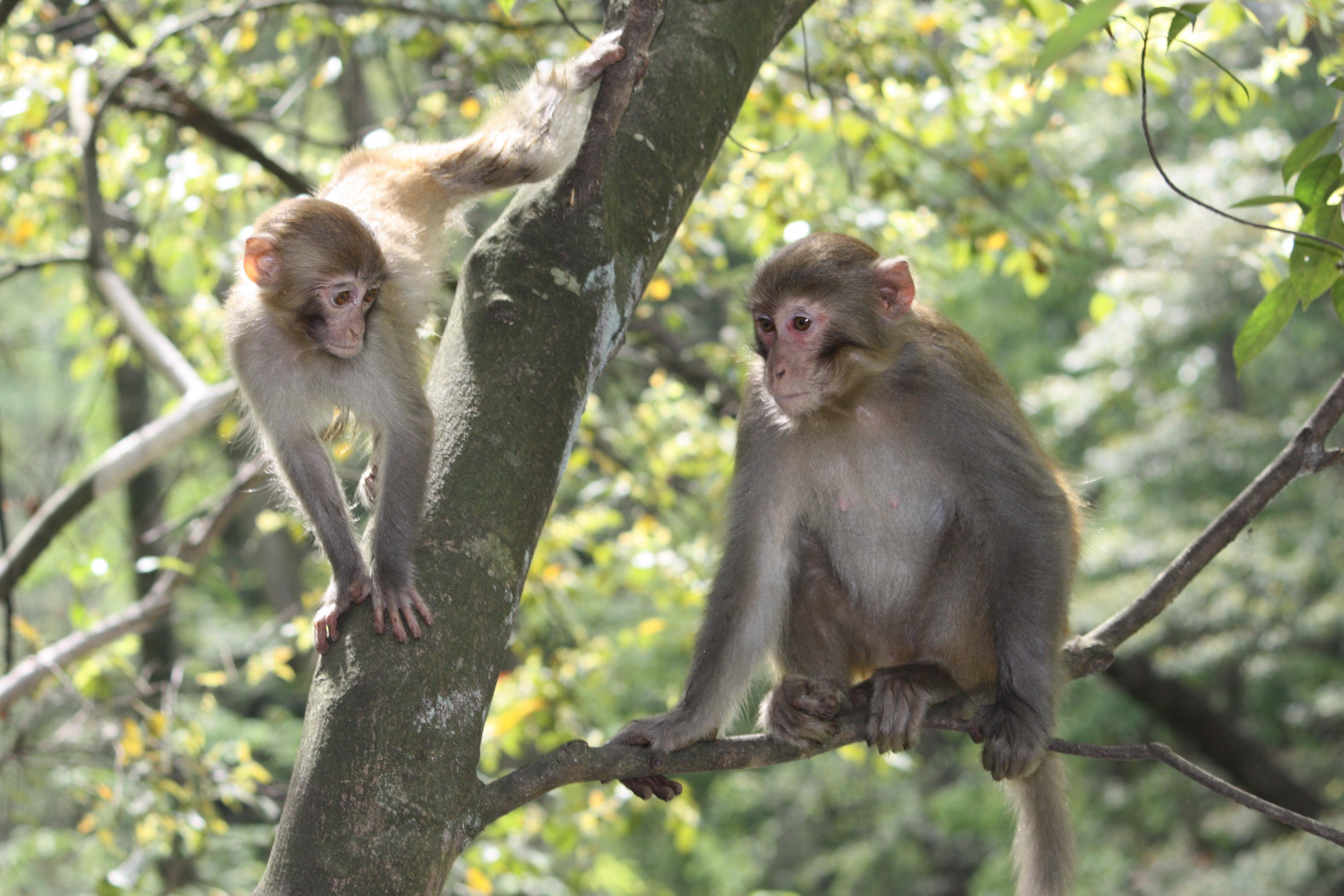 湘西野生动物图片